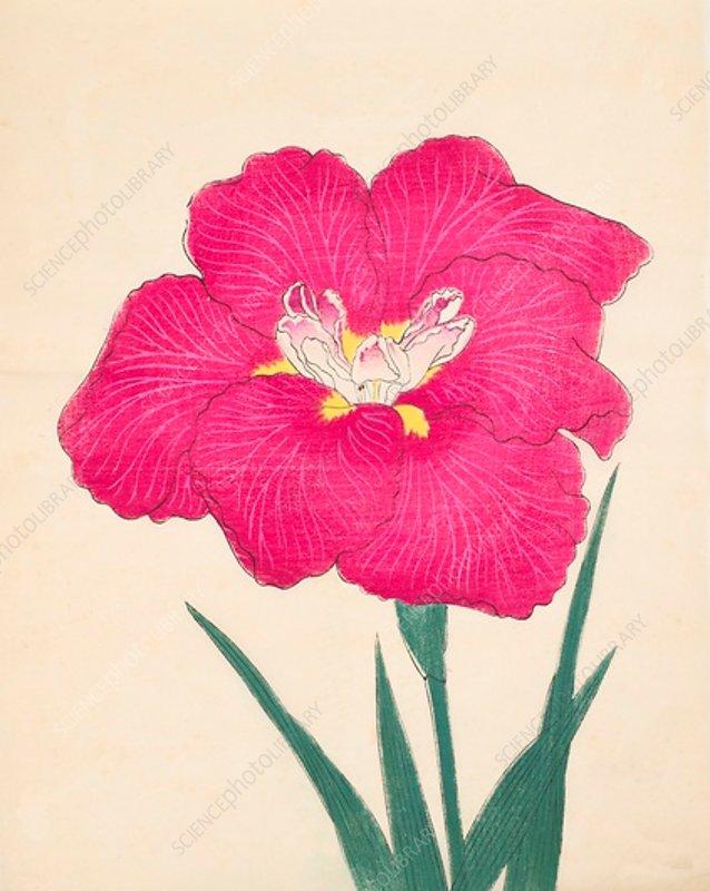 Kagari-Bi, No 38, 1890, colour woodblock print