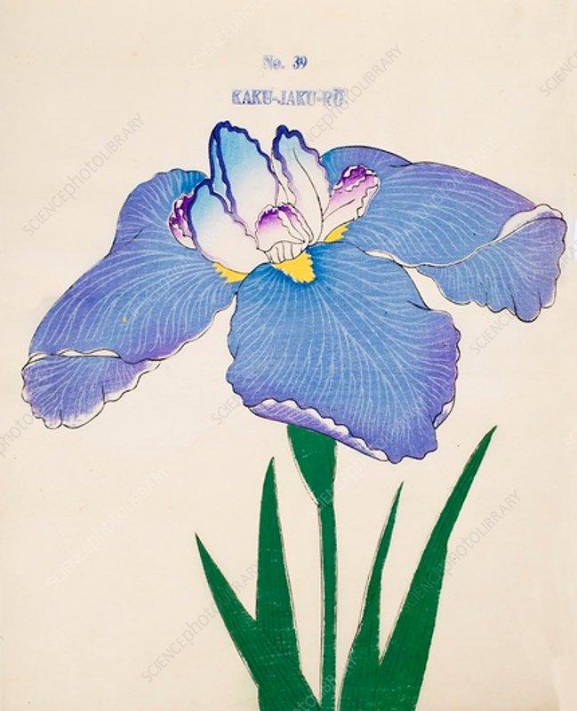 Kaku-Jaku-Ro, No 39, 1890, colour woodblock print