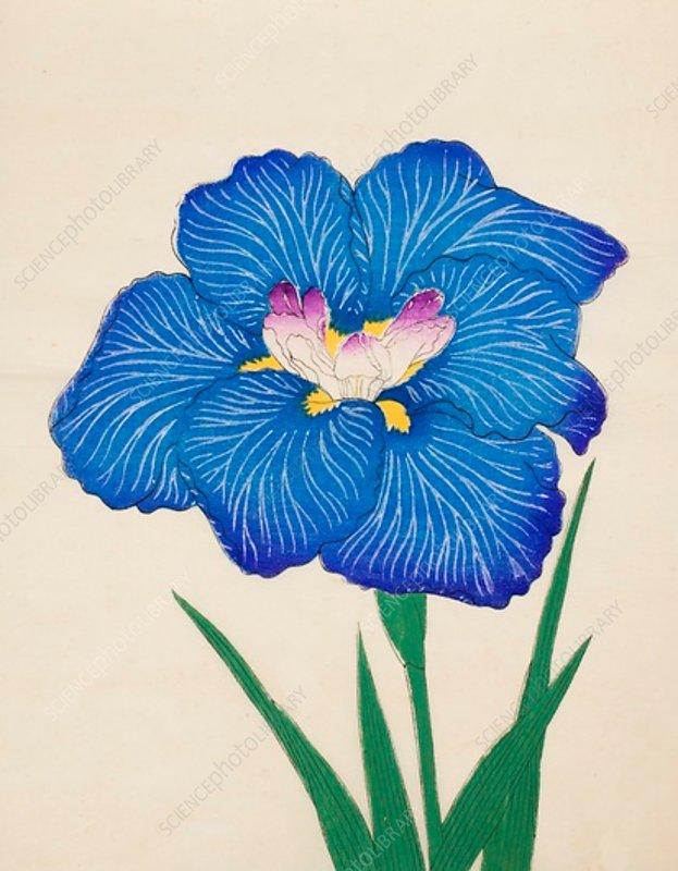 Ushio-No-Kemuri, No 47, 1890, colour woodblock print