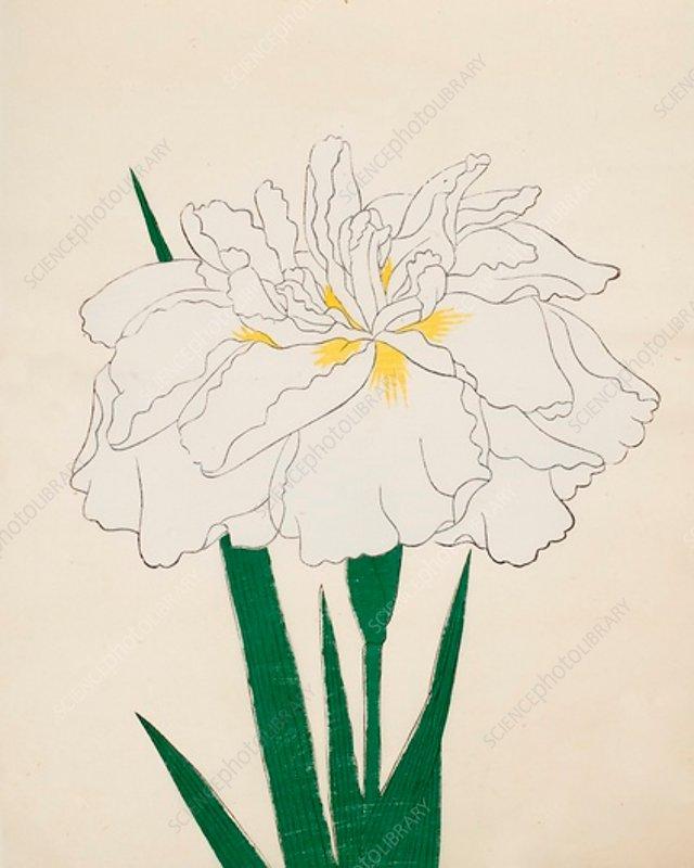 Ujaku-No-Nagisa, No 61, 1890, colour woodblock print