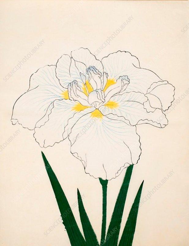 Moro-No-Tsuki, No 97, 1890, colour woodblock print