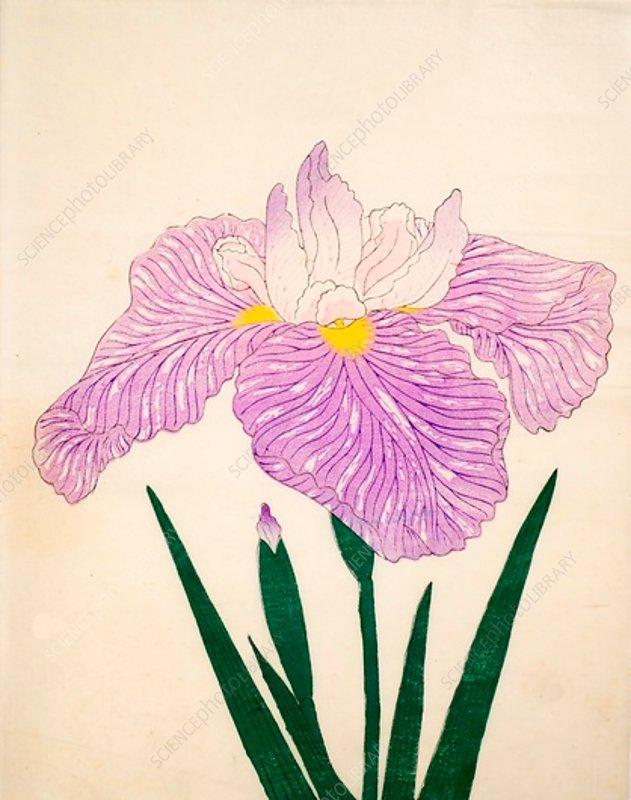 Tama-Usagi, No 98, 1890, colour woodblock print