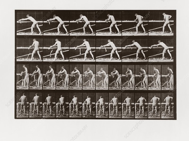 Man planing wood, Plate 379 from Animal Locomotion, 1887
