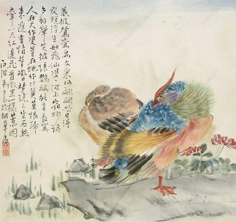 A pair of Mandarin ducks, 1857