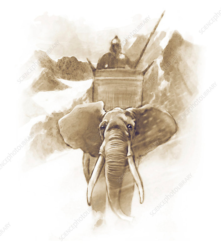 Hannibal mounted on a war elephant, 218 BC