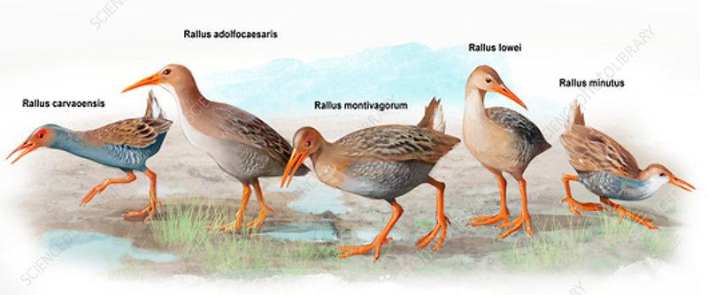 Prehistoric rails, illustration