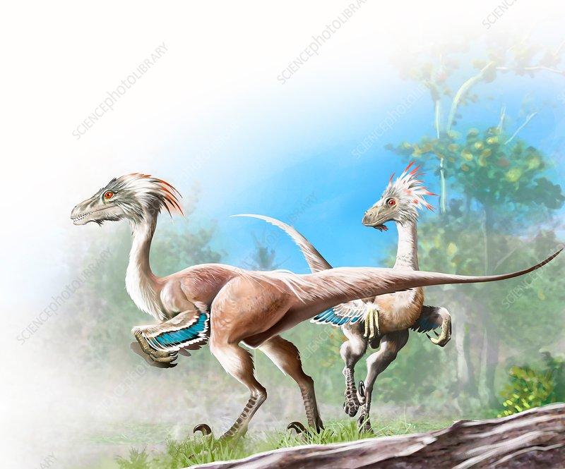 Unenlagia dinosaurs, illustration