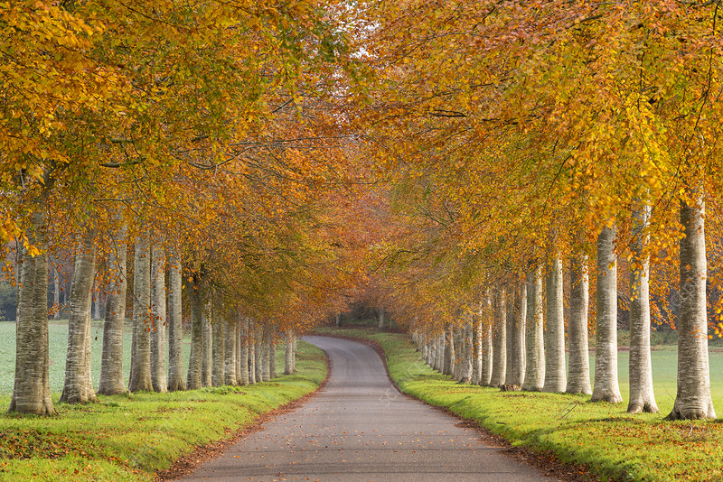 Avenue of autumn trees