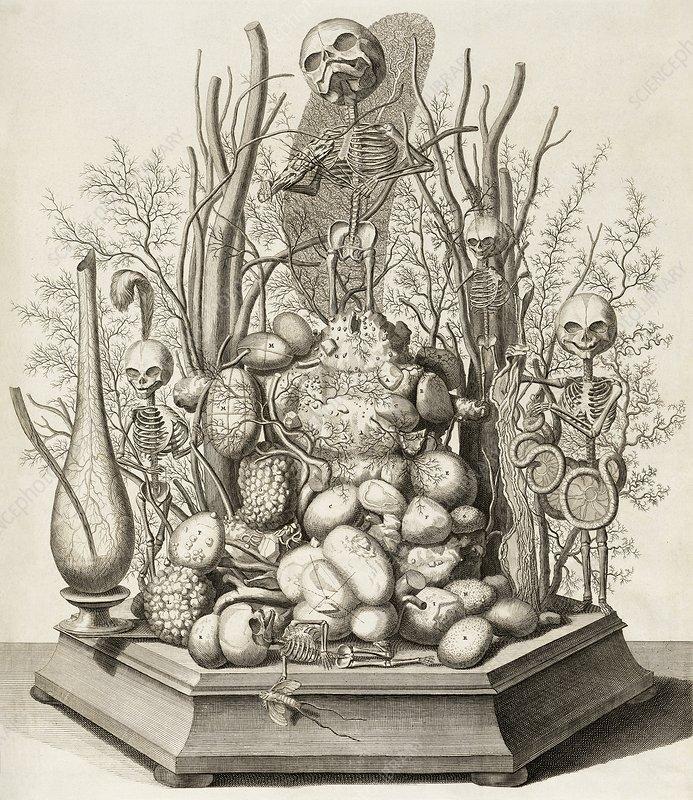 Foetal skeletons diorama, 17th century