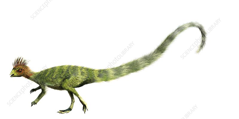 Leaellynasaura, illustration