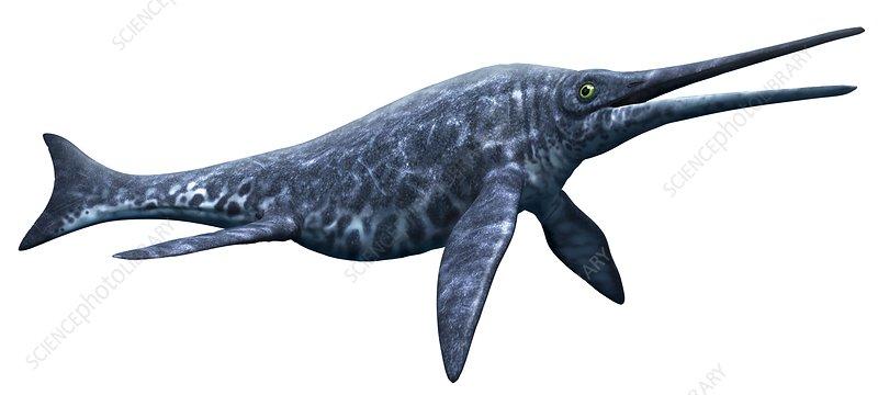 Shonisaurus, illustration