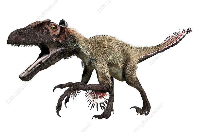 Utahraptor, illustration