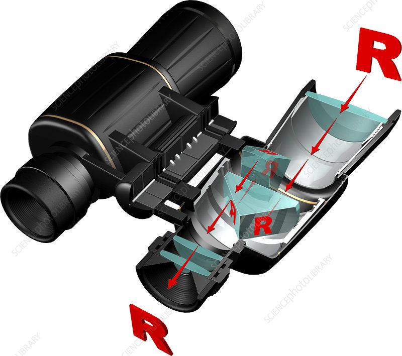 Prism binoculars