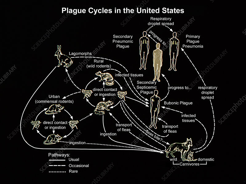 Plague Cycles in the United States