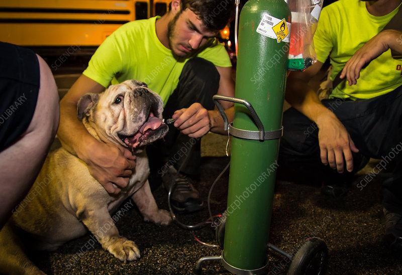 Pet Rescue, Hurricane Harvey