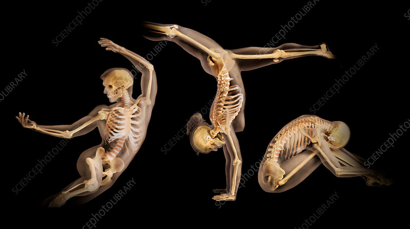 Anatomical Models, Athletic Positions