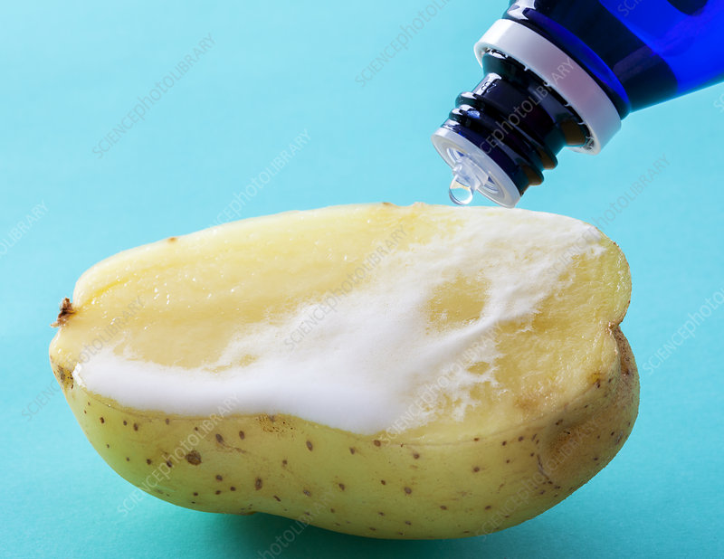 Hydrogen Peroxide Reacts with Catalase in Potato