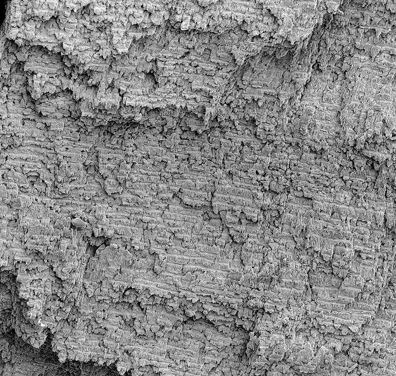 Woolly Mammoth Ivory, SEM