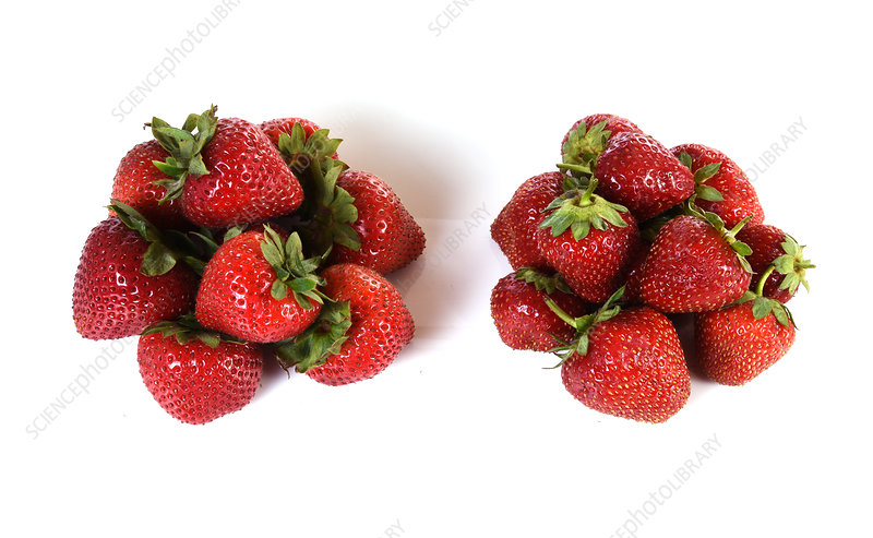 Strawberries Becoming Mouldy, 1 of 4