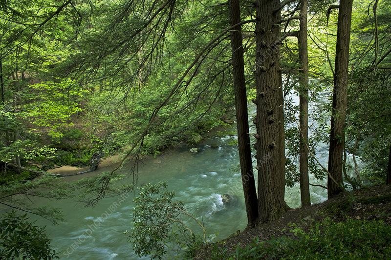 Laurel Hill Creek