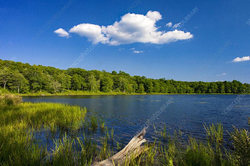 Lily Pond in the Poconos