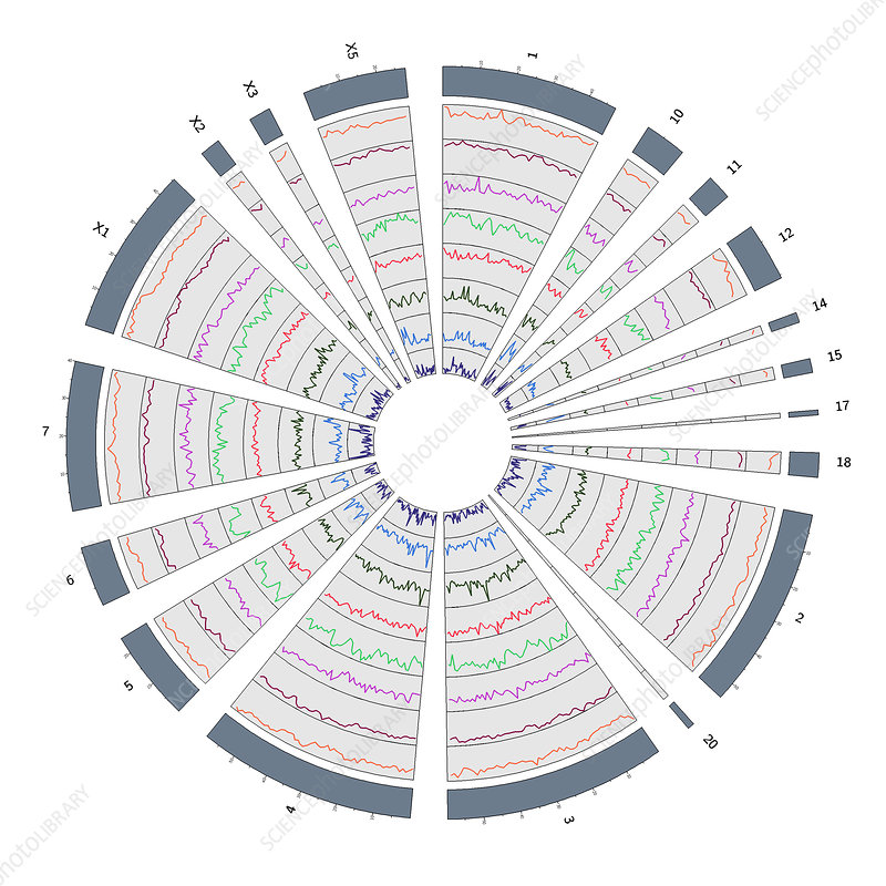 Circos, Circular Genome Map, Platypus - Stock Image - C043 ... on life cycle map, gene map, nucleic acid map, reference genome, data map, genome reference consortium, environment map, west africa map, sci-fi map, chromosome map, yersinia pestis map, immunity map, brave new world map, dna map, bovine genome, genetics map, language map, ecology map, genesis map, snp map, building a linkage map, science map, nature map, chimpanzee genome project,