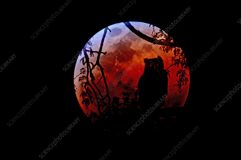 Total Lunar Eclipse and Giant Eagle Owl