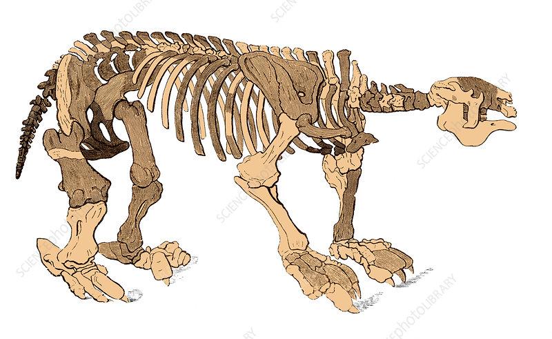 Megatherium Skeleton, Illustration