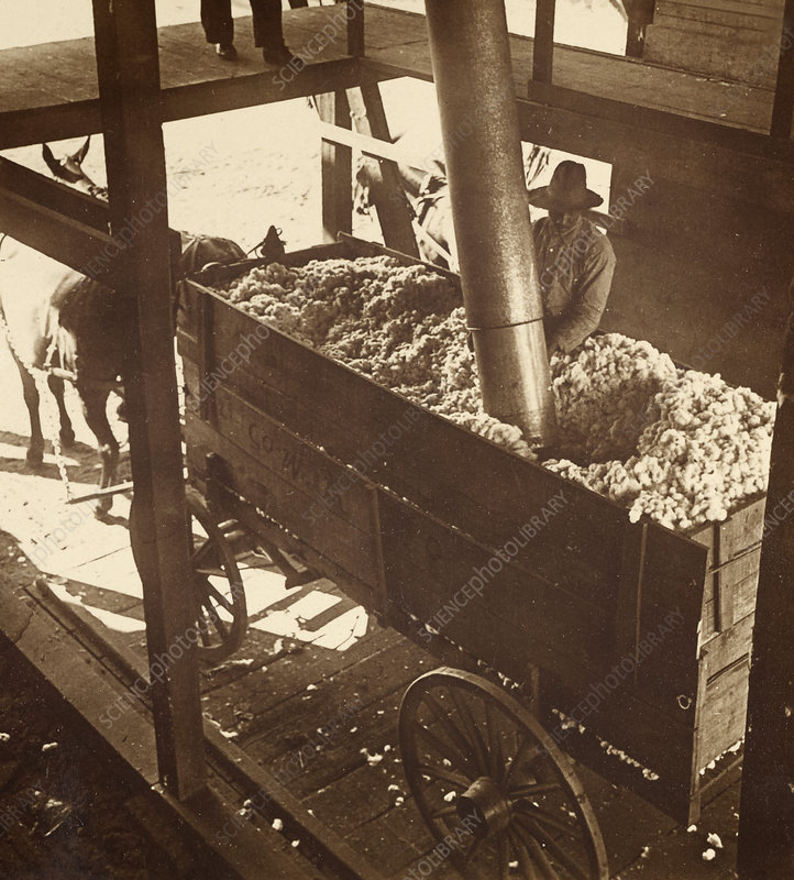 Cotton Gin Unloading by Pneumatic Suction, c. 1900