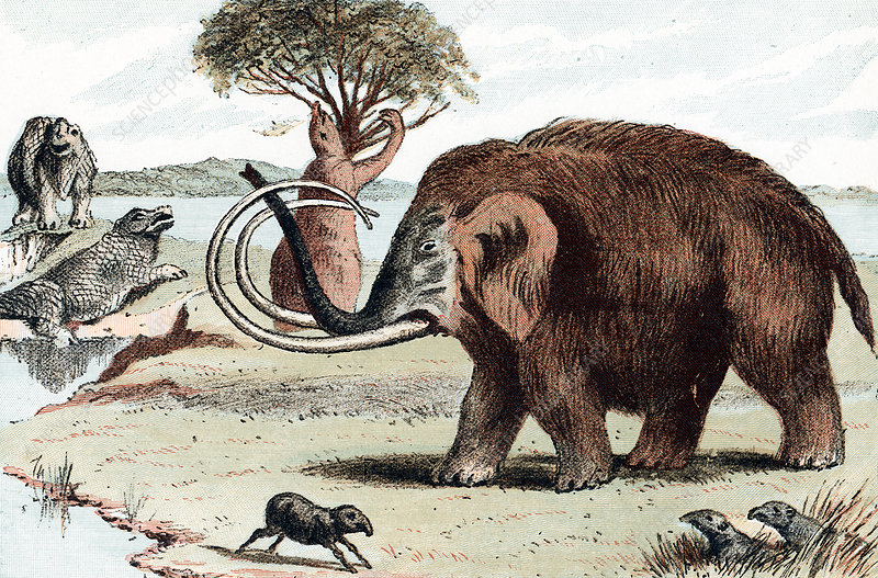 Woolly mammoth, 1892