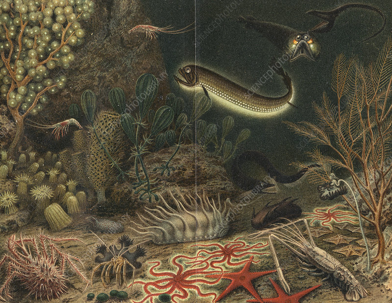 Deep sea scene with luminous fishes, 1903