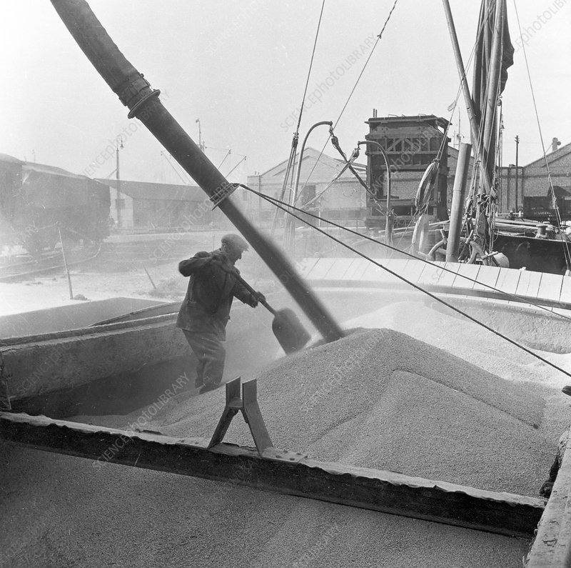 Pumping grain into barges, Millwall, London, 1953