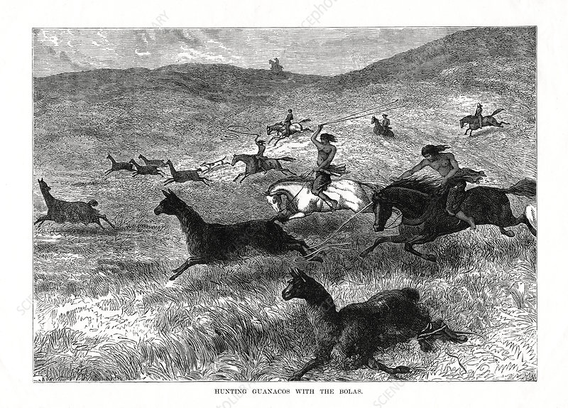 Hunting Guanacos with the Bolas', South America, 1877