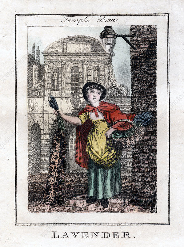 Lavender', Temple Bar, London, 1805