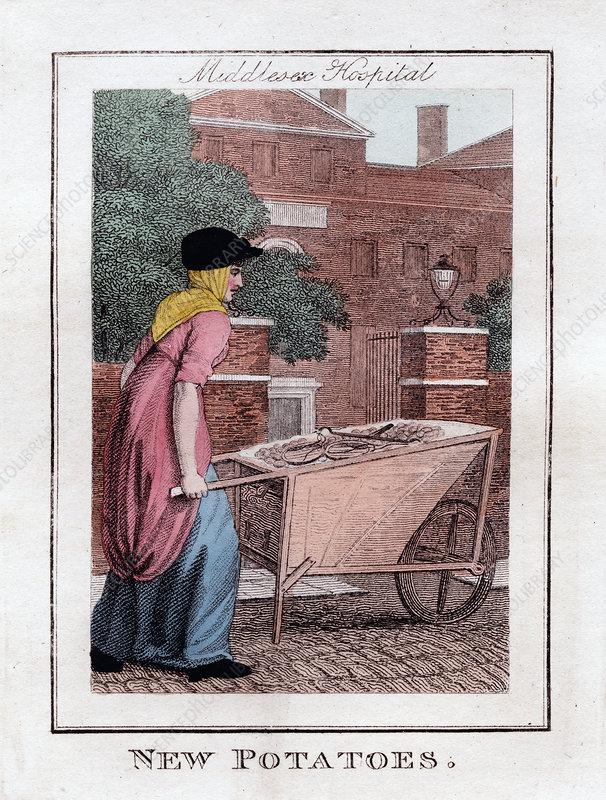 New Potatoes', Middlesex Hospital, London, 1805
