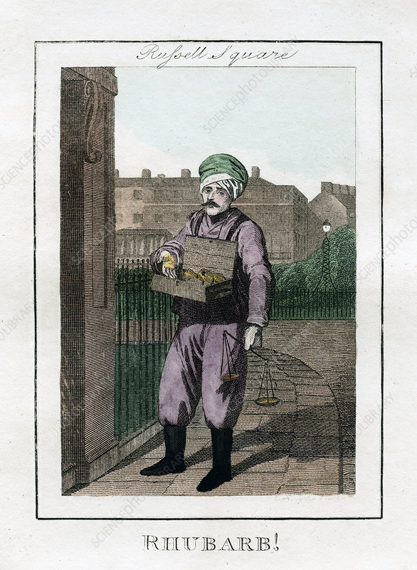 Rhubarb', Russell Square, London, 1805