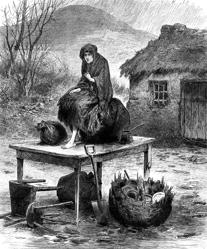 Irish peasant girl guarding family's last possessions, 1886