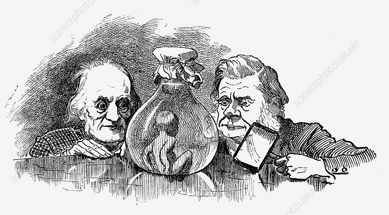 Water Baby' being examined by Richard Owen and TH Huxley
