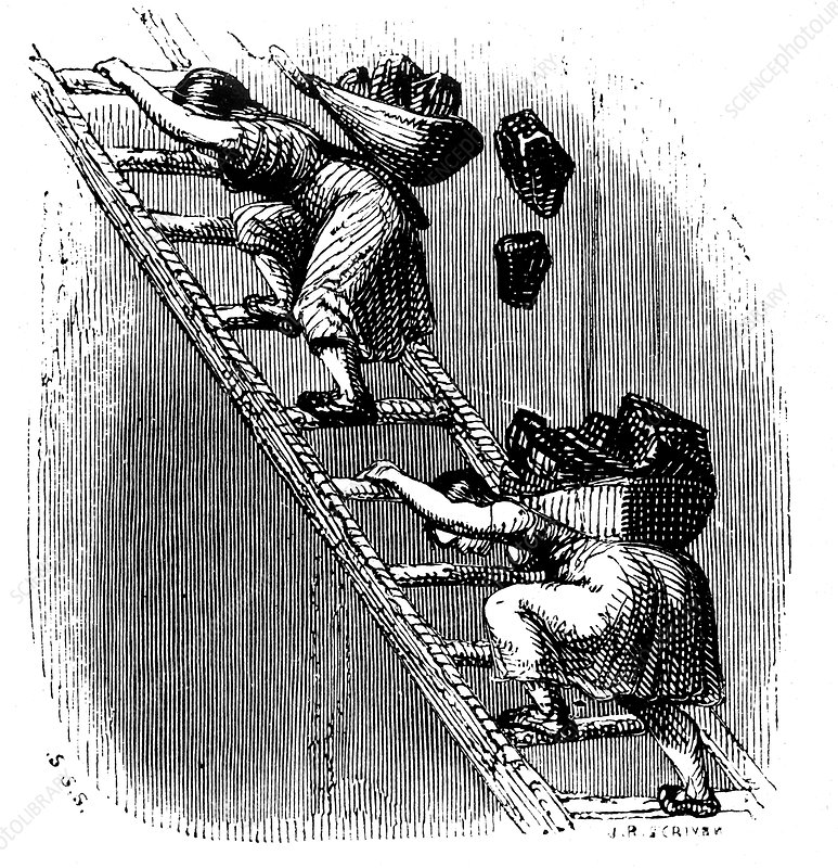 Women workers hauling coal to the surface up a ladder