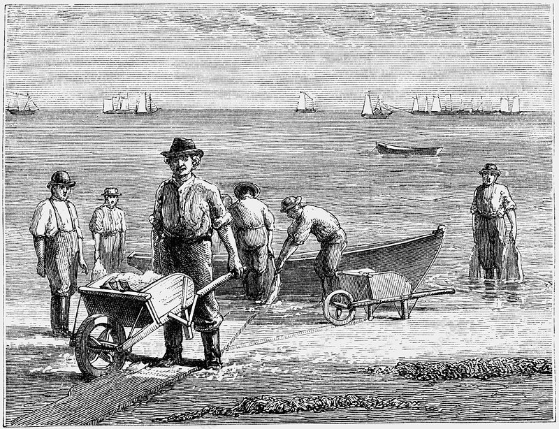 Cape Cod fisherman washing fish, 1875