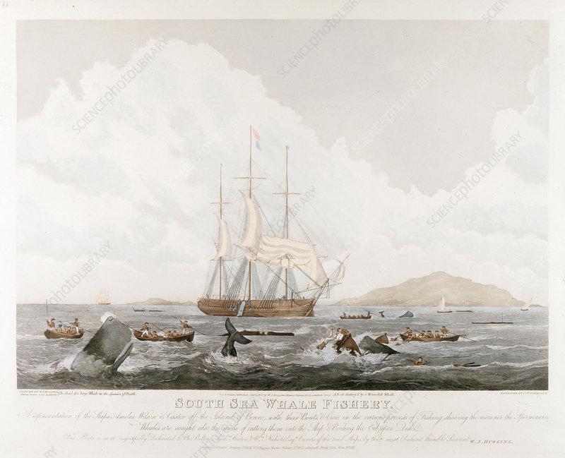 South Sea Whale Fishery, 1825