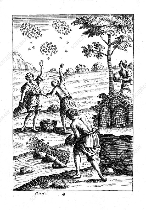 Beekeepers preparing to take a swarm, 18th century