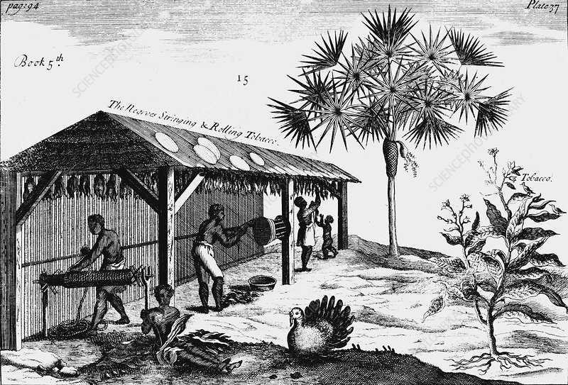 Scene on an American tobacco plantation, 1725