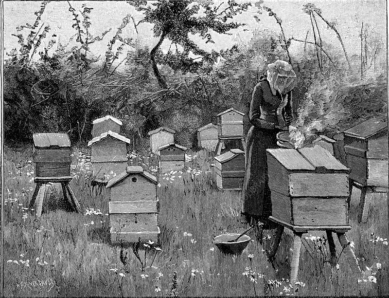 Apiary of wooden hives, Lismore, Ireland, 1890