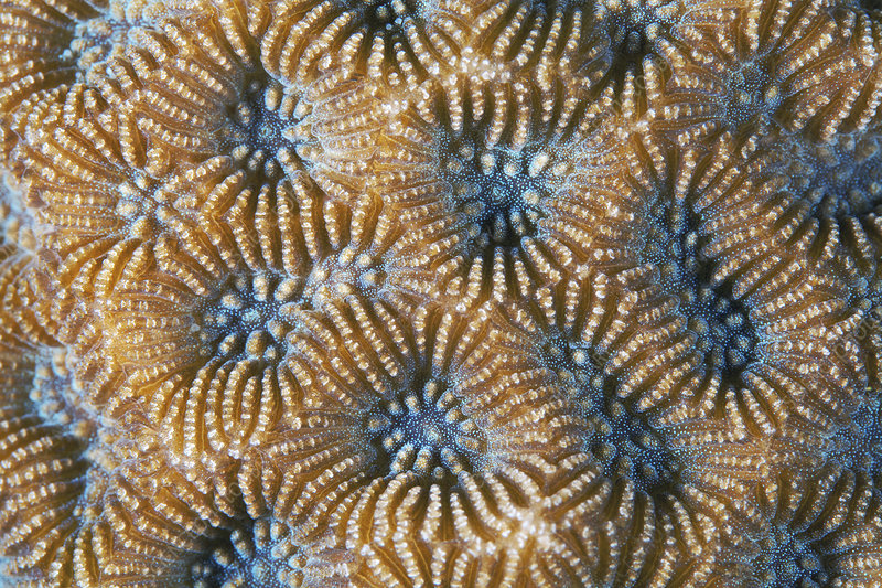 Coral surface