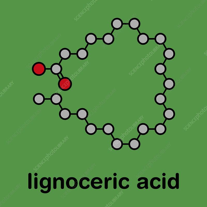 Lignoceric acid molecule