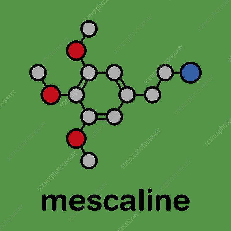 Mescaline peyote cactus psychedelic molecule