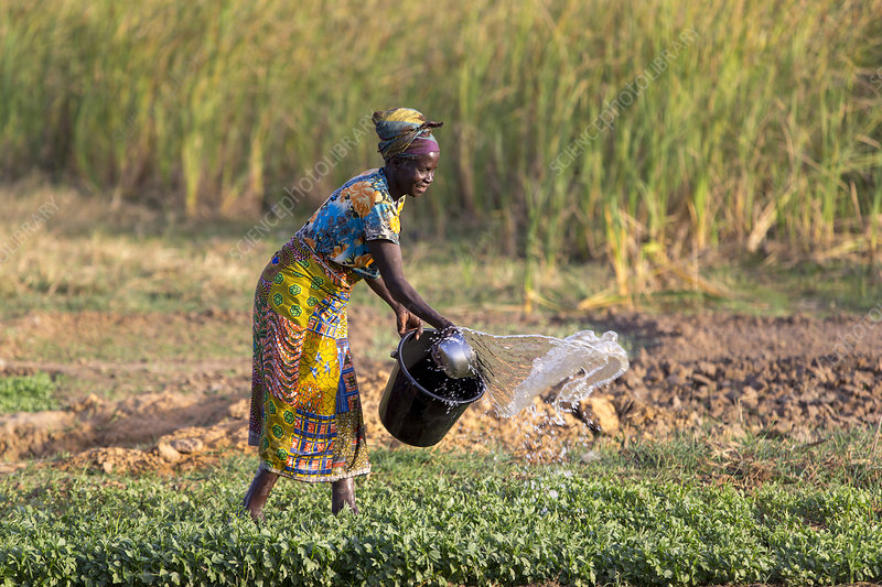 Woman watering her field in Karsome, Togo