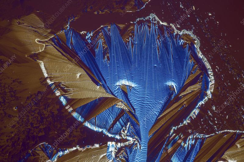 Caffeine crystals, light micrograph