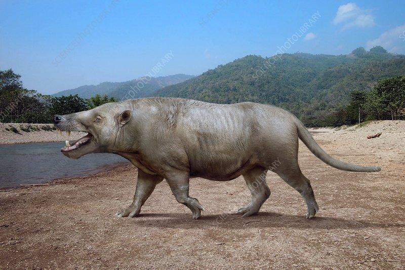 Andrewsarchus prehistoric mammal, illustration